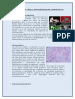 Casos Clínicos de Las Bacterias Anaeróbicas Gramnegativas
