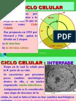 CICLO CELULAR-MITOSIS -MEIOSIS  v-OD, 20152.LRM..ppt