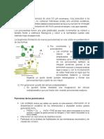 Exposición (peroxisomas, ribosoma y centriosoma).docx