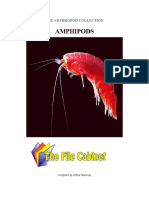 The Arthropod Collection - Amphipods