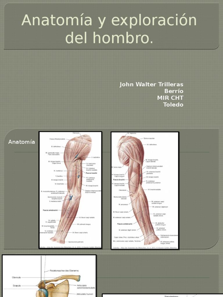 Anatomía y Exploración Del Hombro