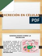 Excrecion Celular