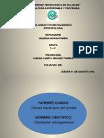 Clavibacter Michiganensis.. Valeria Morga Parra 3f