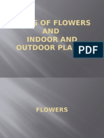 Types of Flowers and Plants