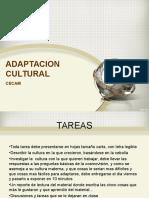 Adaptacion Cultural Presentacion