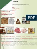 Bacillus Cereus en alimentos