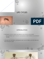 Life Cycle of Mosquito