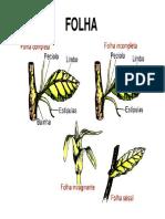 Anatomia órgãos vegetativos - folha.pdf