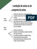 Organiz interna corpo vegetal parte III.pdf