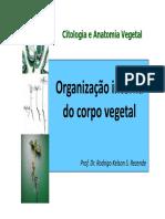 Organização interna corpo vegetal parte1.pdf