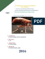 Informe - Zoología