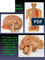 Tronco Cerebral y Nv Craneales Cerebelo