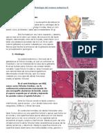 12.- Histologia Del Sistema Endocrino II