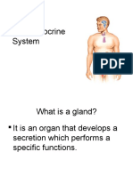 The Endocrine System.ppt