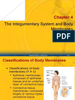 4 Integumentary & Membranes