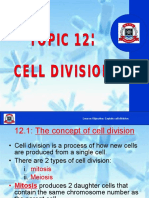 12. Cell Division