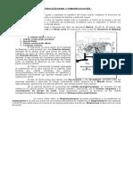 Fisiología Renal y Osmorregulación