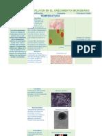 Factores Que Influyen en El Crecimiento Microbiano