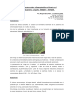 Girasol-Informe Enfermedades Foliares 2007 2008