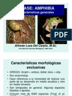 Amphibia Zoo PDF 2013