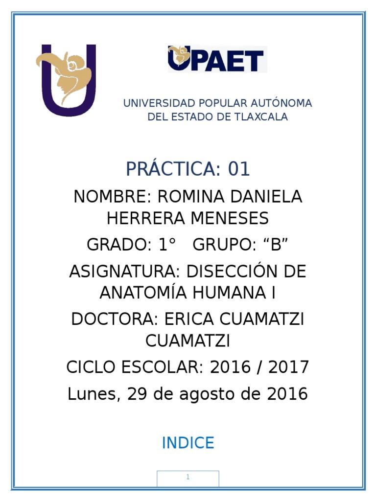 Práctica 01 - Disección de Anatomía Humana.docx