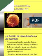 Reproduccion Animales