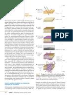 4°E-Desafío-13-Mosaico-fluido.pdf