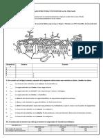 ACTIVIDADES-MEMBRANAS-INCLUYE-CORRECCION (1).docx