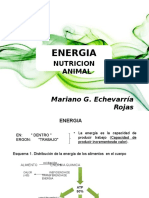 Energia Nutricion Animal