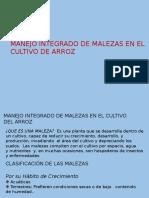 MANEJO INTEGRADO DE MALEZAS  DEL CULTIVO DE ARROZ