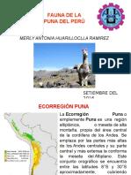 Fauna de La Puna Del Peru