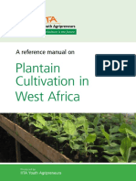 Plantain Cultivation in West Africa