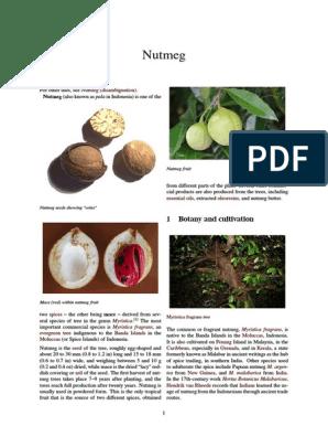Nutmeg   Nutmeg   Foods