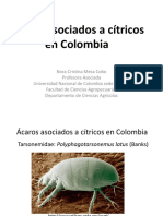 Ácaros Asociados a Cítricos en Colombia
