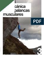 biomecanica de las palancas musculares