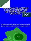 Células Imunes_Maturação Linfócitos B