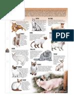 articles-28879_recurso_jpg.pdf