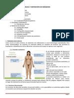 Anatomia a Plica Da 2 Concept Os