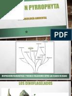 División Pyrrophyta