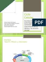 Ciclo celular mitosis y meiosis histología
