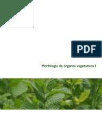 2015 01 Org Veg1 FAGRO
