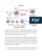 Patogenia TBC