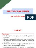 Partes de Una Planta (1)