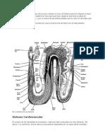 Atlas de La Anatomía de Una Serpiente.