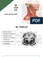 Anatomia triangulos cuello