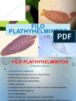 4. B Filo Plathyhelminthes Polo