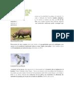 animales extincion.docx