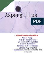 Aspergillus é um gênero de cerca de 200