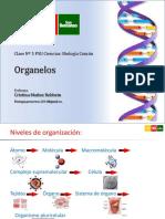 Clase 6 Biologc3ada Organelos