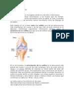 Anatomia de la Rodilla y Danza